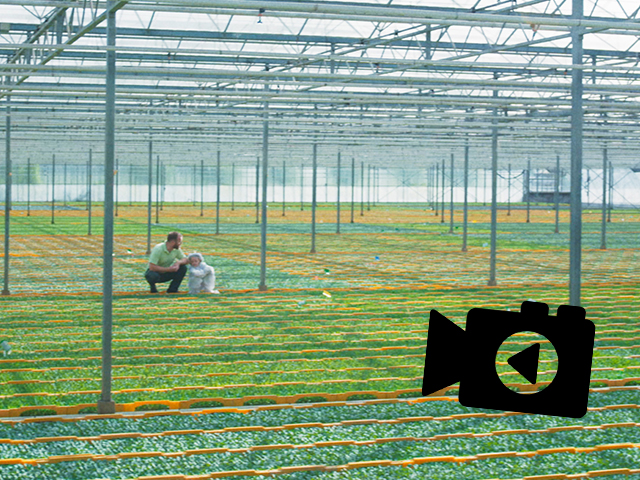 From Seed To Tomatoes, Beekenkamp Vegetables Shows It In The New Corporate Movie!