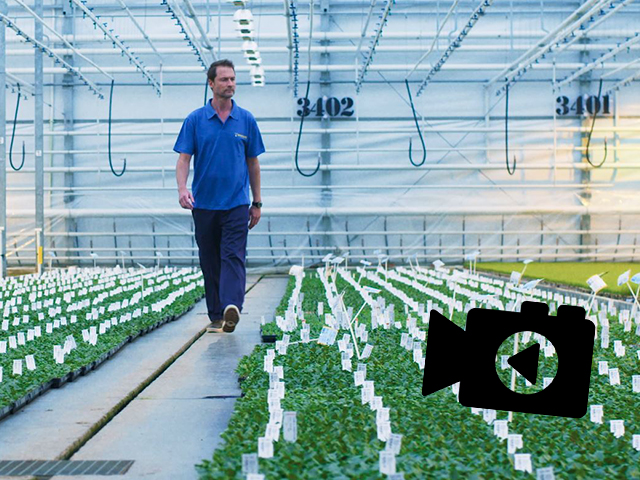 Beekenkamp Plants Launches The New Corporate Film For Ornamentals!