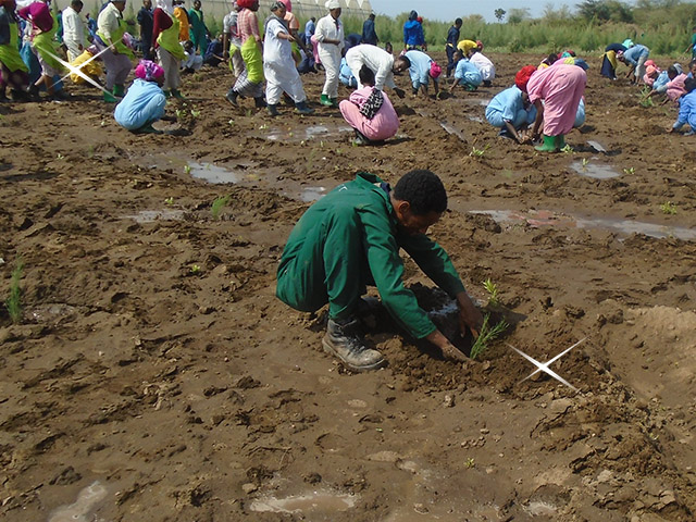 The Beekenkamp Group Helps To Set The World Record For Planting Trees In Ethiopia