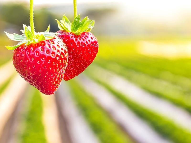 Expo-SE Asparagus & Strawberry Event