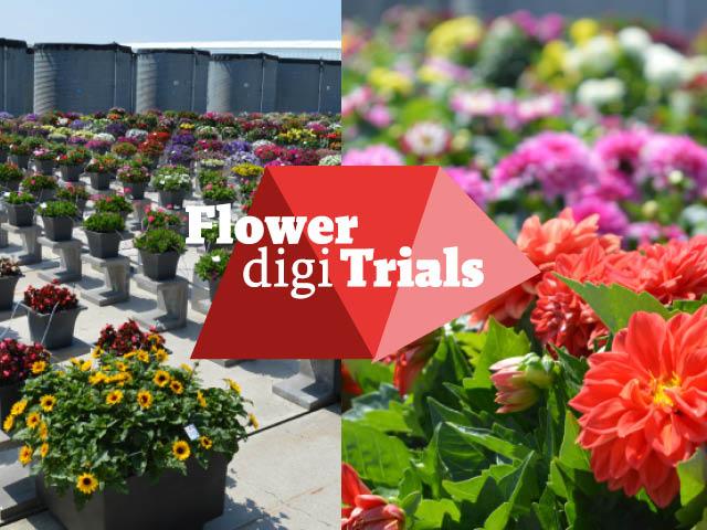 Flower Digi Trials