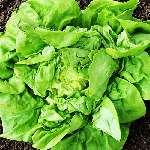 Unterglas-Salat