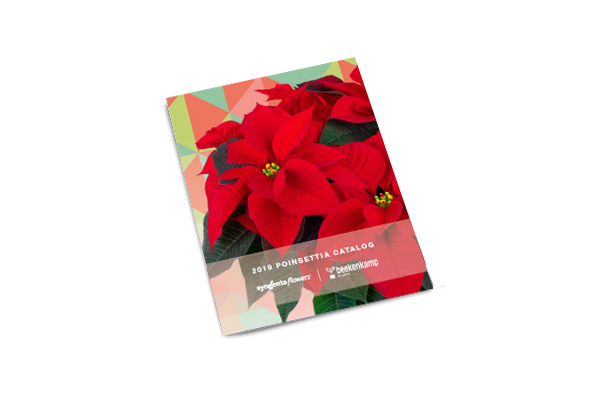 Poinsettia USA