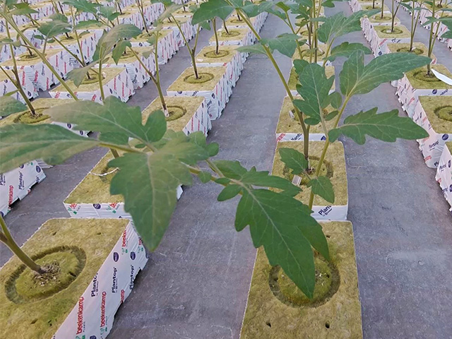 Het R&D Team Van Beekenkamp Plants Werkt Met GoPro Voor Meer Inzicht