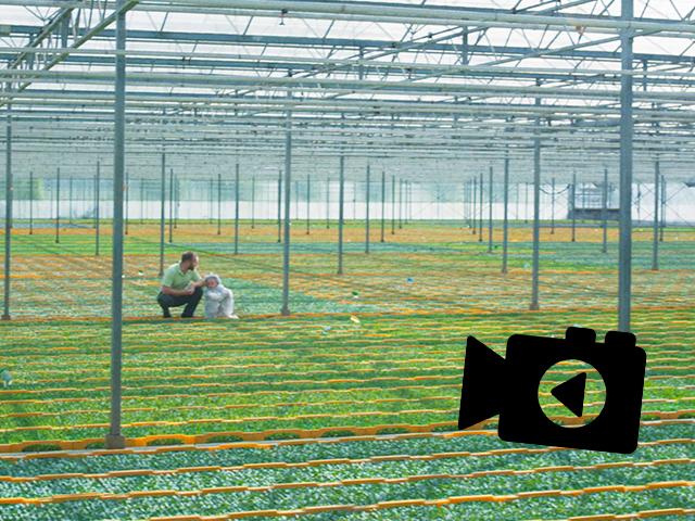 Van Zaadje Tot Tomatenplant, Beekenkamp Vegetables Laat Het Zien In Nieuwe Bedrijfsfilm!