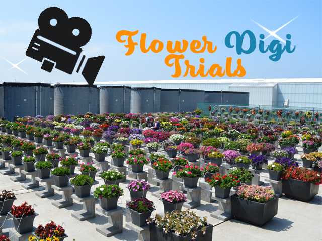BEEKENKAMP PLANTS LANCEERT FLOWER DIGI TRIALS ALS ALTERNATIEF VOOR FLOWERTRIALS