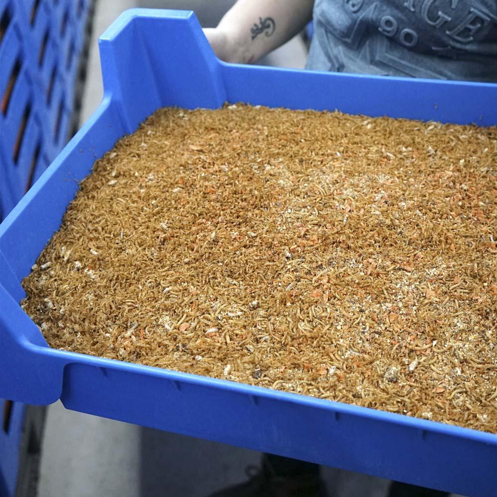 Verwonderend Insectenteelt - Insecten kweekbakken - Beekenkamp Verpakkingen GJ-01
